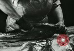 Image of Fish skin plant in Germany Germany, 1942, second 10 stock footage video 65675021789