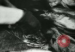 Image of Fish skin plant in Germany Germany, 1942, second 12 stock footage video 65675021789