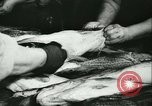 Image of Fish skin plant in Germany Germany, 1942, second 18 stock footage video 65675021789
