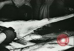 Image of Fish skin plant in Germany Germany, 1942, second 20 stock footage video 65675021789