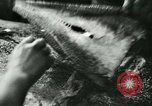 Image of Fish skin plant in Germany Germany, 1942, second 25 stock footage video 65675021789