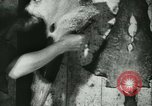 Image of Fish skin plant in Germany Germany, 1942, second 39 stock footage video 65675021789