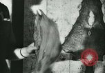 Image of Fish skin plant in Germany Germany, 1942, second 40 stock footage video 65675021789