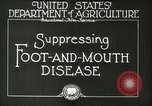 Image of foot and mouth disease United States USA, 1925, second 13 stock footage video 65675022110