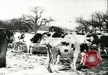 Image of foot and mouth disease United States USA, 1925, second 35 stock footage video 65675022111