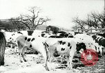 Image of foot and mouth disease United States USA, 1925, second 39 stock footage video 65675022111