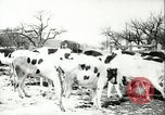 Image of foot and mouth disease United States USA, 1925, second 40 stock footage video 65675022111