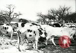 Image of foot and mouth disease United States USA, 1925, second 42 stock footage video 65675022111