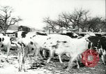 Image of foot and mouth disease United States USA, 1925, second 44 stock footage video 65675022111