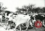 Image of foot and mouth disease United States USA, 1925, second 45 stock footage video 65675022111