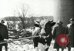 Image of foot and mouth disease United States USA, 1925, second 58 stock footage video 65675022111