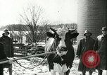 Image of foot and mouth disease United States USA, 1925, second 60 stock footage video 65675022111