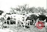 Image of foot and mouth disease United States USA, 1925, second 31 stock footage video 65675022113