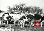 Image of foot and mouth disease United States USA, 1925, second 32 stock footage video 65675022113