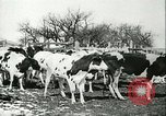 Image of foot and mouth disease United States USA, 1925, second 33 stock footage video 65675022113