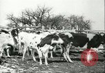 Image of foot and mouth disease United States USA, 1925, second 34 stock footage video 65675022113