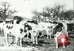 Image of foot and mouth disease United States USA, 1925, second 37 stock footage video 65675022113