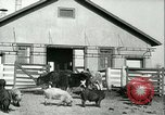 Image of foot and mouth disease United States USA, 1925, second 15 stock footage video 65675022114