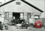 Image of foot and mouth disease United States USA, 1925, second 16 stock footage video 65675022114