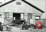 Image of foot and mouth disease United States USA, 1925, second 17 stock footage video 65675022114