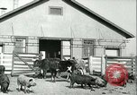 Image of foot and mouth disease United States USA, 1925, second 18 stock footage video 65675022114