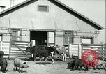 Image of foot and mouth disease United States USA, 1925, second 20 stock footage video 65675022114