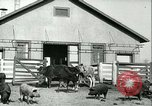 Image of foot and mouth disease United States USA, 1925, second 21 stock footage video 65675022114