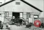 Image of foot and mouth disease United States USA, 1925, second 22 stock footage video 65675022114