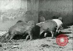 Image of foot and mouth disease United States USA, 1925, second 23 stock footage video 65675022114