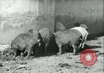 Image of foot and mouth disease United States USA, 1925, second 24 stock footage video 65675022114