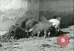 Image of foot and mouth disease United States USA, 1925, second 26 stock footage video 65675022114