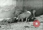 Image of foot and mouth disease United States USA, 1925, second 27 stock footage video 65675022114