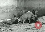 Image of foot and mouth disease United States USA, 1925, second 28 stock footage video 65675022114