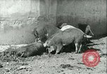 Image of foot and mouth disease United States USA, 1925, second 29 stock footage video 65675022114