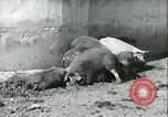 Image of foot and mouth disease United States USA, 1925, second 30 stock footage video 65675022114