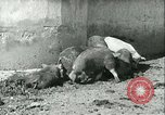 Image of foot and mouth disease United States USA, 1925, second 31 stock footage video 65675022114