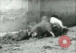 Image of foot and mouth disease United States USA, 1925, second 32 stock footage video 65675022114