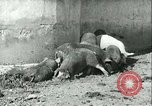 Image of foot and mouth disease United States USA, 1925, second 33 stock footage video 65675022114