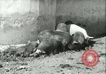 Image of foot and mouth disease United States USA, 1925, second 34 stock footage video 65675022114
