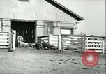 Image of foot and mouth disease United States USA, 1925, second 48 stock footage video 65675022114