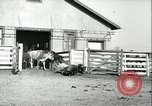 Image of foot and mouth disease United States USA, 1925, second 51 stock footage video 65675022114