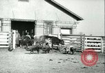 Image of foot and mouth disease United States USA, 1925, second 53 stock footage video 65675022114