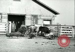 Image of foot and mouth disease United States USA, 1925, second 54 stock footage video 65675022114