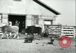 Image of foot and mouth disease United States USA, 1925, second 58 stock footage video 65675022114