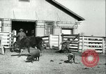 Image of foot and mouth disease United States USA, 1925, second 59 stock footage video 65675022114