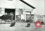 Image of foot and mouth disease United States USA, 1925, second 60 stock footage video 65675022114