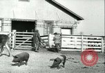 Image of foot and mouth disease United States USA, 1925, second 62 stock footage video 65675022114