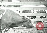 Image of foot and mouth disease California United States USA, 1925, second 29 stock footage video 65675022115