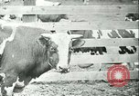 Image of foot and mouth disease California United States USA, 1925, second 33 stock footage video 65675022115