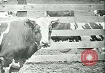 Image of foot and mouth disease California United States USA, 1925, second 34 stock footage video 65675022115